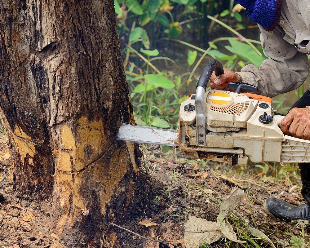 Tree Service Oklahoma City - Tree Removal