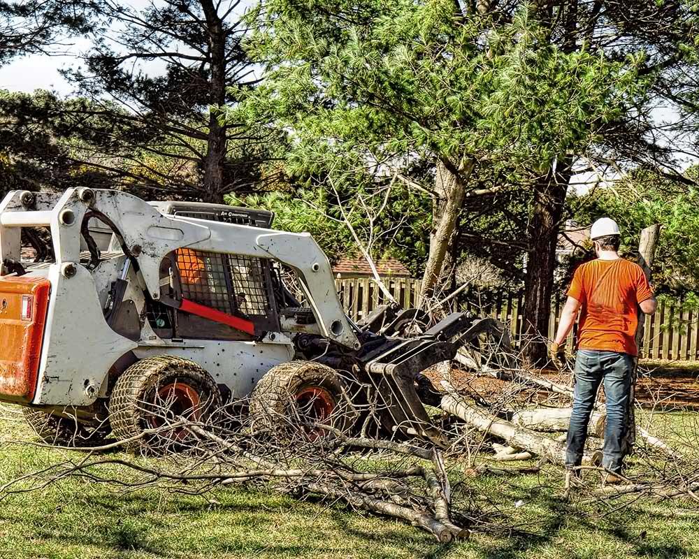 Oklahoma City Tree Service Experts