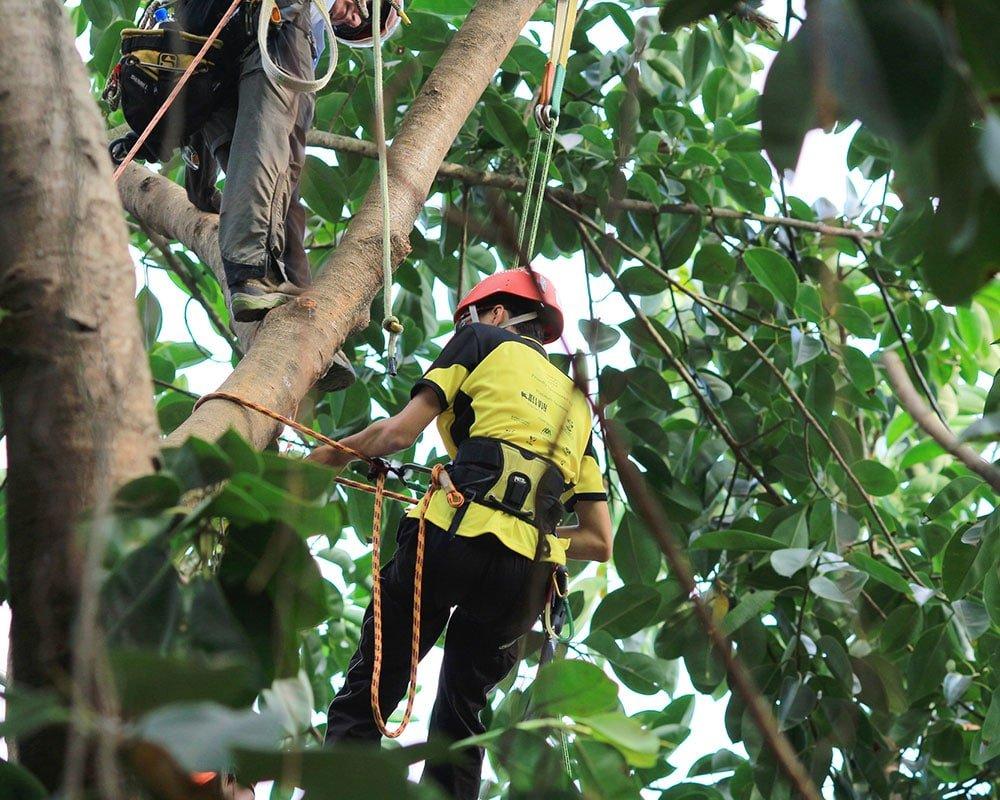 Tree Service Oklahoma City - Emergency Tree Removal