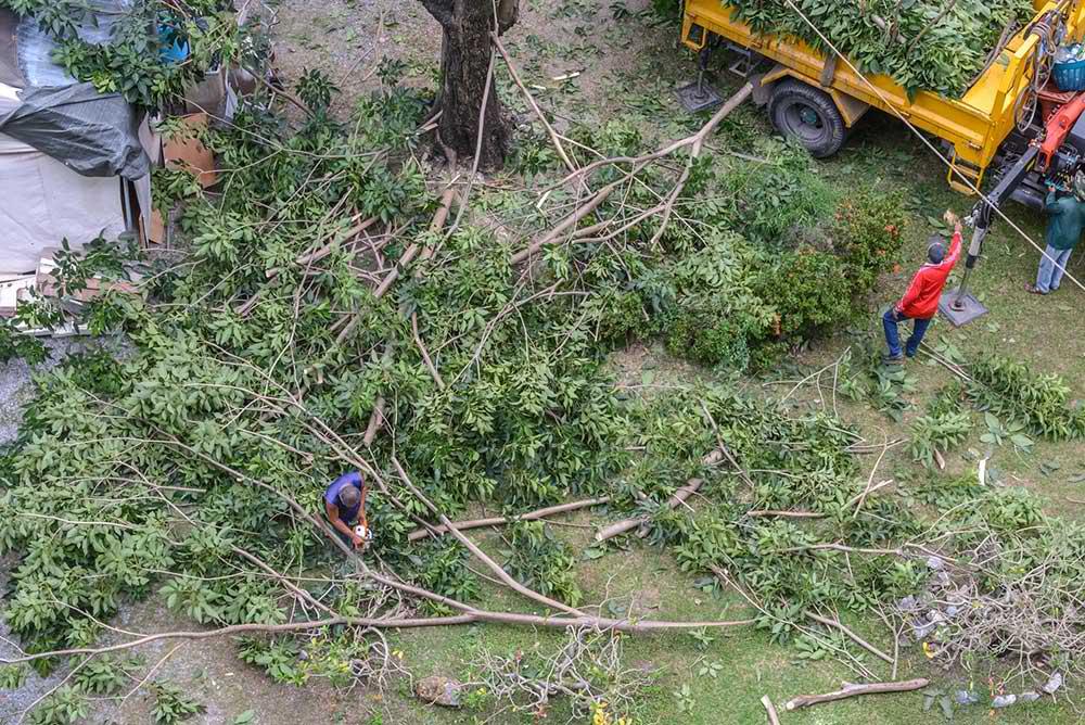 Tree Service Oklahoma City - Tree Trimming